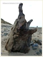 Driftwood at Whiteford Point 1.2