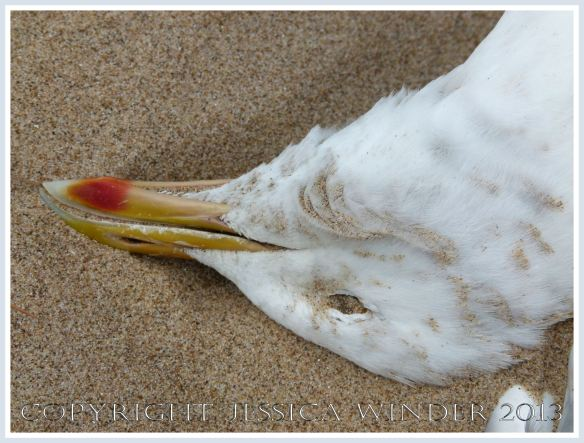 Dead seagull on a sandy beach