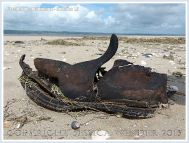 Old leather shoe washed ashore as flotsam on a sandy beach