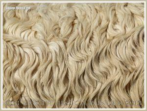 Curly wool sheep fleece