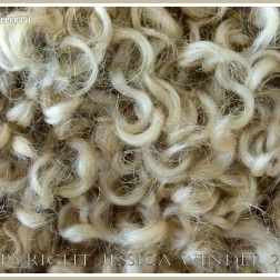 Curly wool sheep fleece