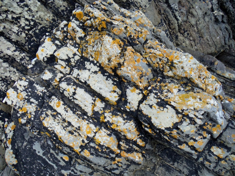 Pattern and texture of lichens on limestone