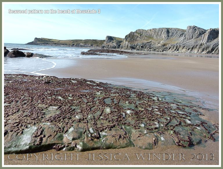 Natural pattern of green and red algae on a seashore rock