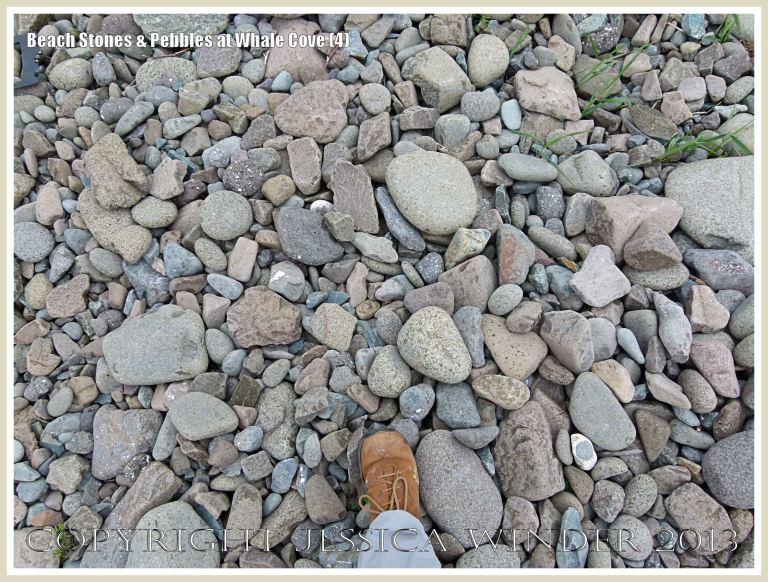 Beach stones at Whale Cove