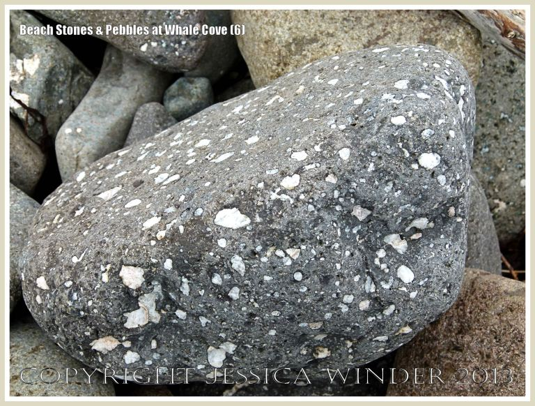 Beach stone shape, texture, and pattern at Whale Cove