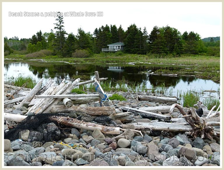 Driftwood on the bank of beach stones that acts as a barrier between the sea and the saltmarsh lake at Whale Cove.