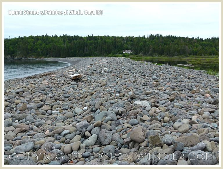 Beach stone barrier at Whale Cove on Grand Manan.