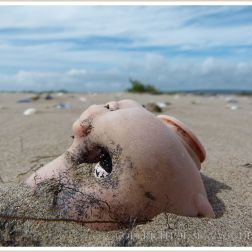 Doll's head washed ashore as flotsam