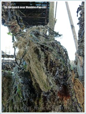 Flotsam caught up on the girders supporting Mumbles Pier