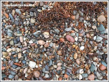 Pebble variety on a New Brunswick beach