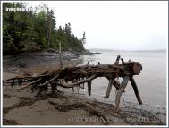 Driftwood on a New Brunswick beach