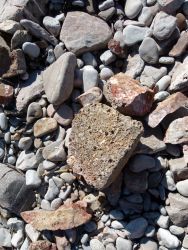 Beach stone with holes mostly made by boring bivalved molluscs
