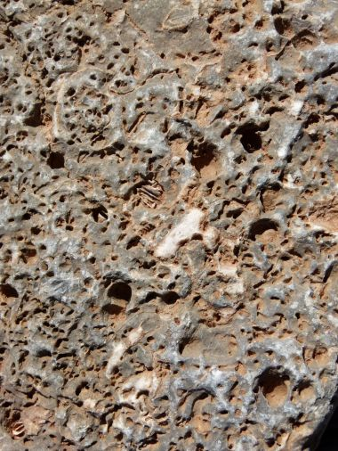 Close-up of a beach stone with holes mostly made by boring bivalved molluscs