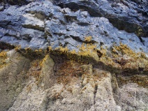 Seaweed growing on a cliff face