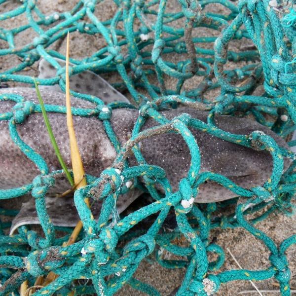Rope & Net Flotsam 1