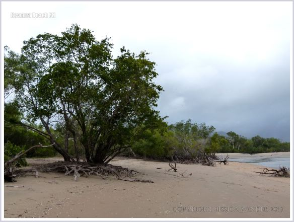 Trees growing on a sandy beach