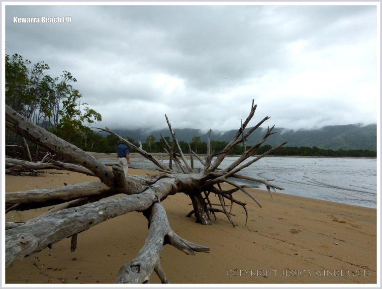 Driftwood on a sandy Australian beach