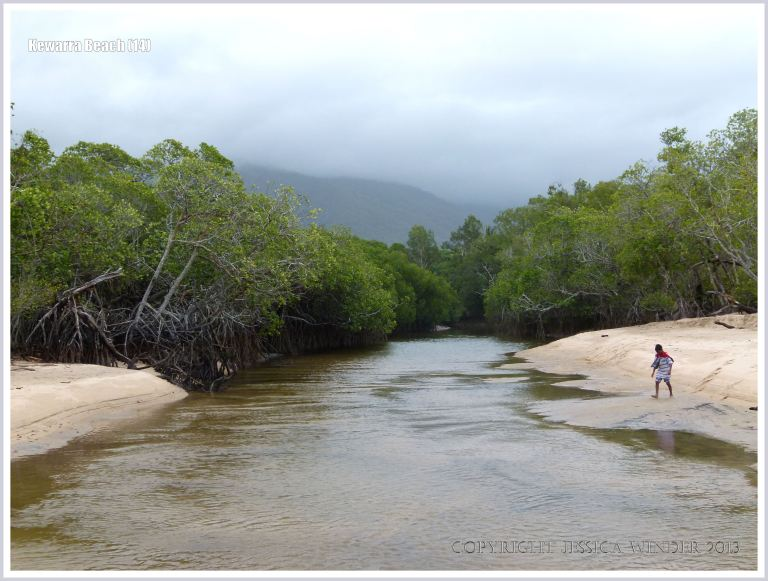 Mangrove-lined river flowing onto the beach