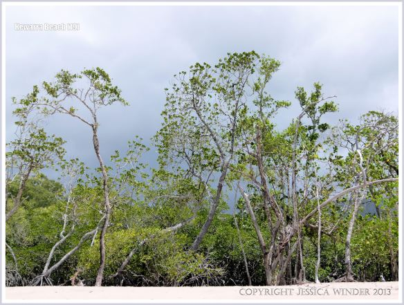 Tropical trees at the top of a sandy beach