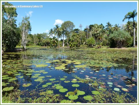 View across the freshwater Centenary Lake at Cairns Botanic Gardens