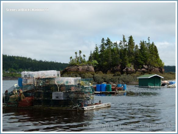 Floating rafts with fishing gear in the Bay of Fundy