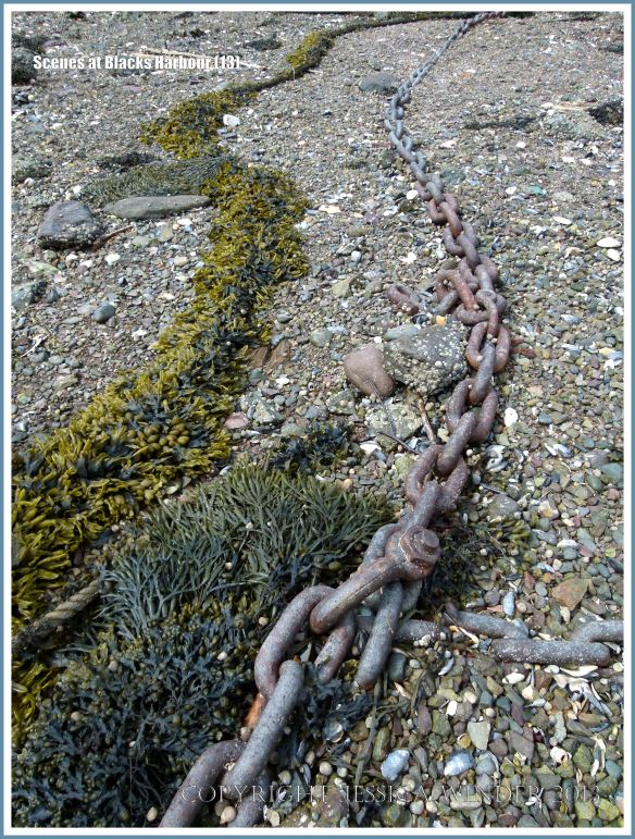 Mooring chain and rope with seaweed amongst beach stones