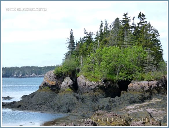 Bay of Fundy inter-tidal zone in New Brunswick