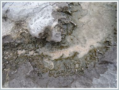 Close-up of the pattern etched by acid erosion into the edge of a shallow water-filled depression on the surface of Carboniferous Limestone outcrop on the beach