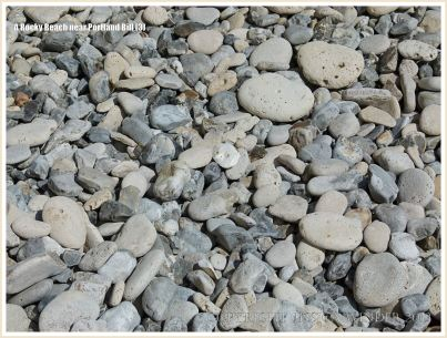 Pebbles on the beach, including many with holes made by marine invertebrates.