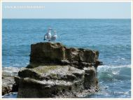 A pair of gulls on a flat-topped rock outcrop surrounded by sea