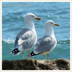 A pair of seagulls enjoying the view out to sea