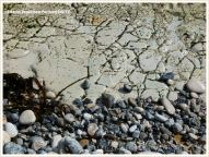 Limestone outcrop on beach showing network pattern of furrows.