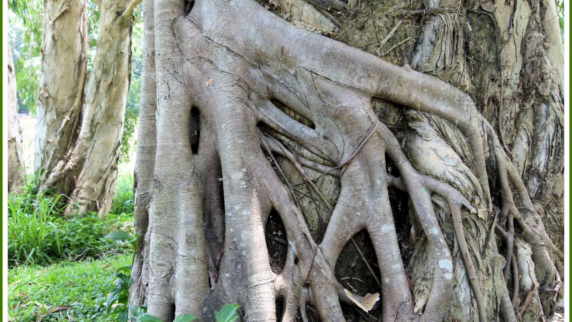 Rainforest At Kuranda Part 1
