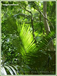 Jungle view with small palm fronds in sunlight