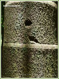 Close-up of the bark of a palm tree in the rainforest