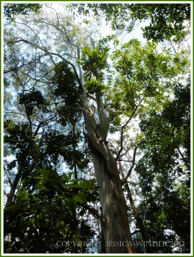 Looking up into the canopy of the rainforest