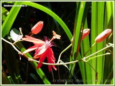Red tropical rainforest flowers