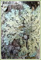 Lichen on a tree trunk in the Queensland rainforest