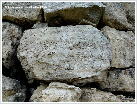 Detail of a block of fossiliferous limestone in a wall beside the coast path on the Isle of Portland