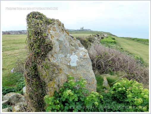 Detail of old stone field boundary by the Isle of Portland coastal path