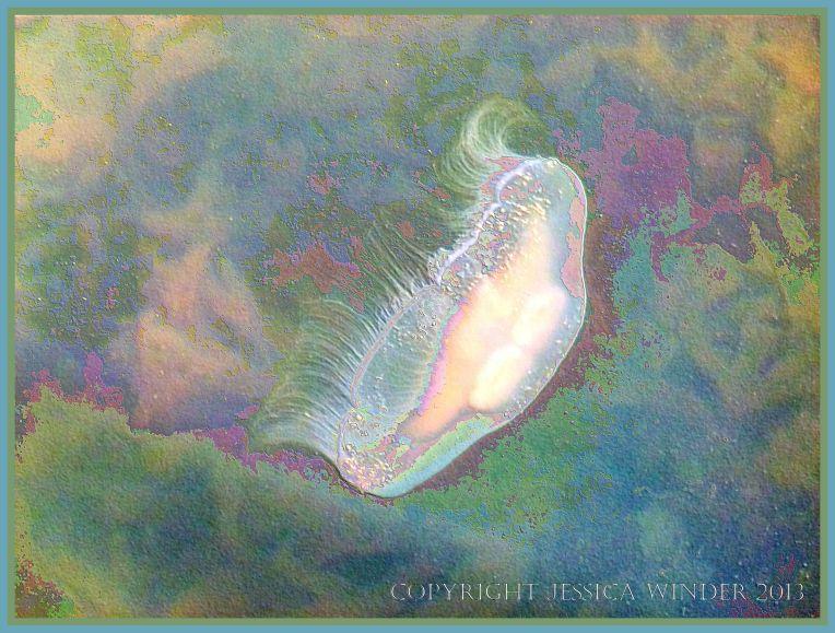 Swimming Moon Jellyfish