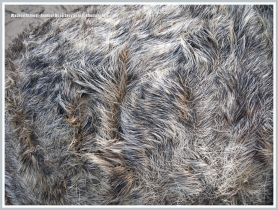 Close-up of matted fur on an adult dead Grey Seal