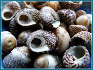 Top Shells