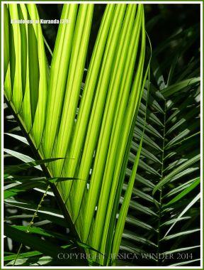 Back-lit translucent rainforest leaves