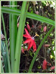 Red flower in the tropical rainforest