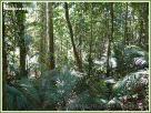 View through the rainforest trees