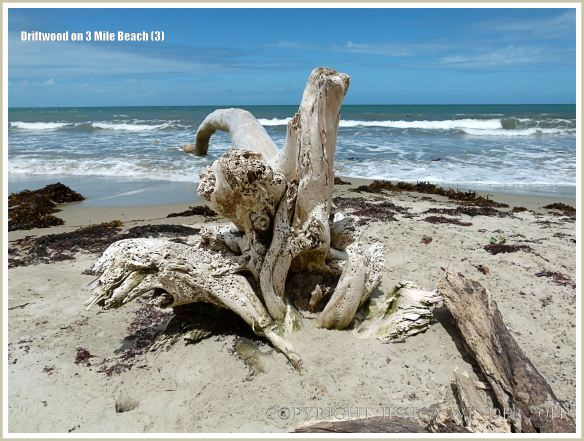 Bleached white driftwood washed ashore at Three Mile Beach in Port Douglas, Queensland, Australia.