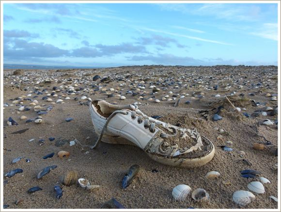 White trainer shoe washed up on beach with seashells