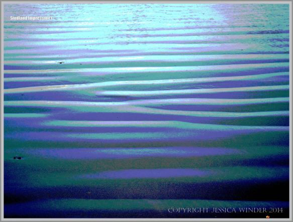 sand ripples on the seashore