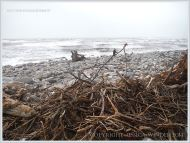 Driftwood storm debris on a shingle beach in Dorset